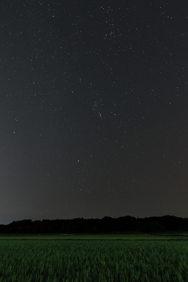 麦畑の星空B.jpg
